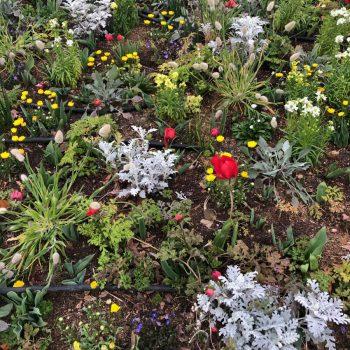 春の注意点